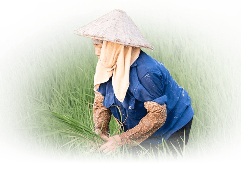 Income Programme - Agricultural Cooperatives